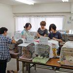 猫の譲渡会in武蔵境 終了しました