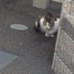 7月12日(日)猫の譲渡会 緊急☆開催です